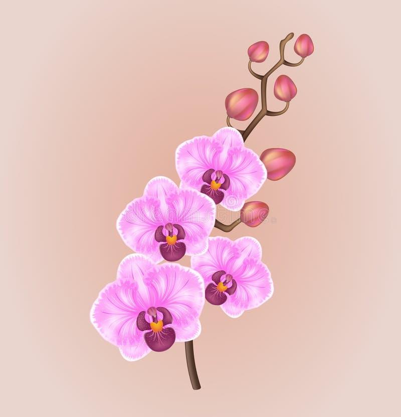 Реалистический свет - фиолетовая винтажная элегантная орхидея на светлой предпосылке иллюстрация вектора