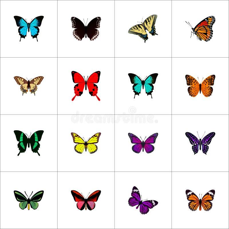 Реалистический фиолетовый монарх, тропическая сумеречница, Callicore Cynosura и другие элементы вектора Комплект бабочки реалисти бесплатная иллюстрация
