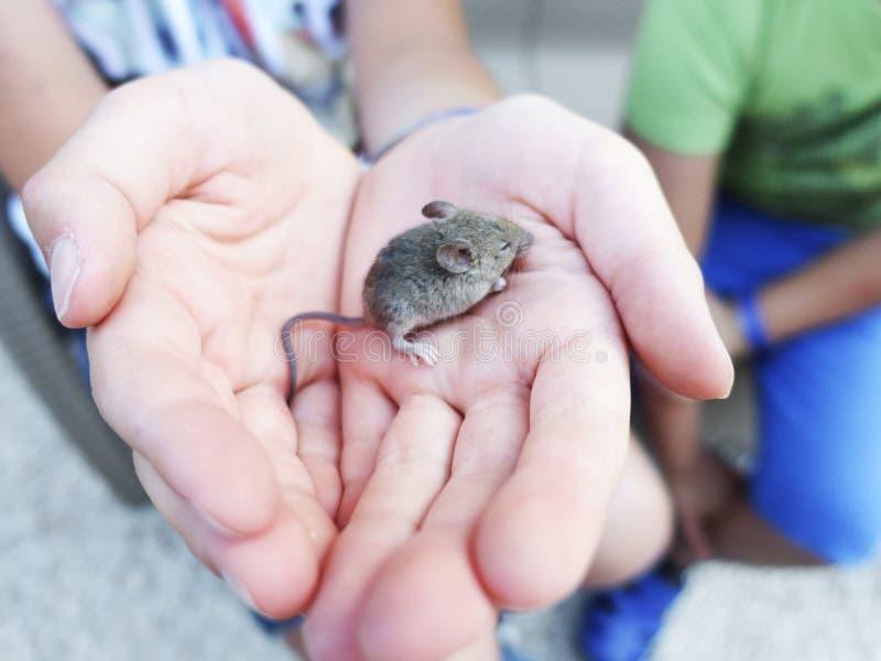 Реальная мышь в руке стоковые изображения rf