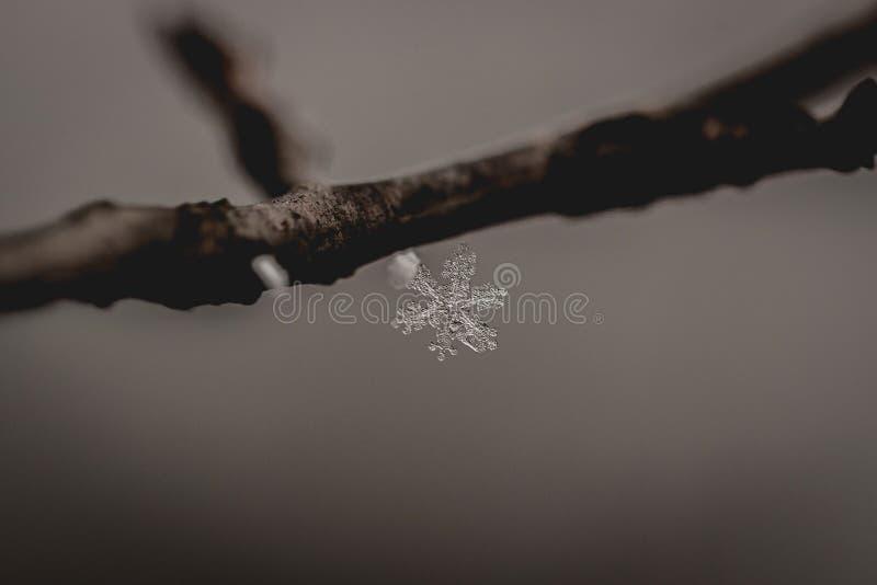 реальная снежинка стоковая фотография rf