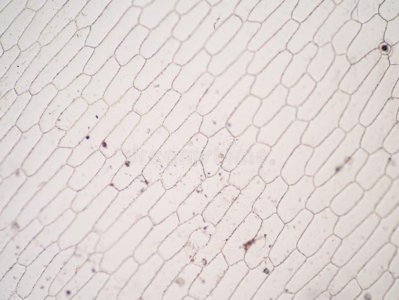 Реальные клетки завода фото стоковое изображение