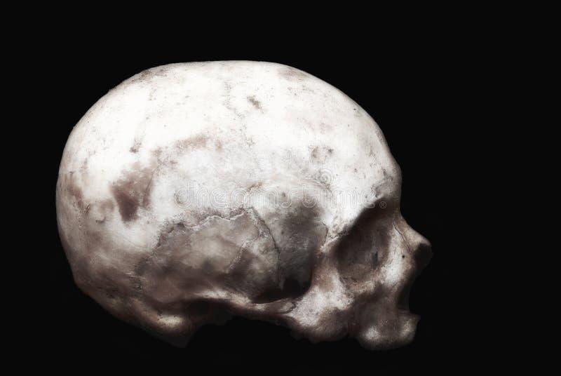 Реальный человеческий череп на изолированной черной предпосылке стоковое изображение