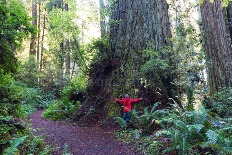 Ребенк в лесе redwood стоковые изображения rf