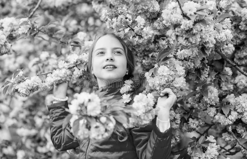 Ребенк наслаждаясь розовым вишневым цветом m Пинк girlish цвет r Пинк мой фаворит стоковая фотография