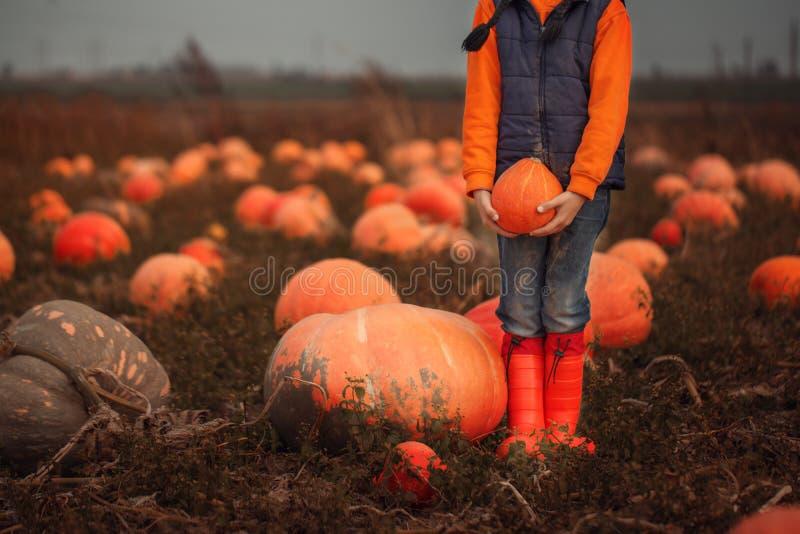 Ребенок держа оранжевую тыкву на поле тыквы на падении стоковое изображение rf