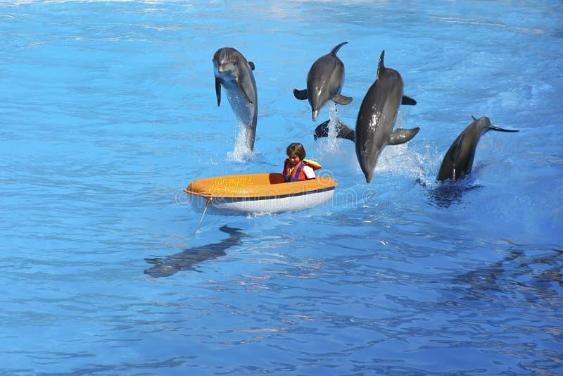 Ребенок и дельфины стоковые изображения rf