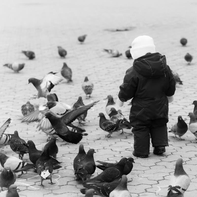 Ребенок подает голуби Ребенок идя в красную теплую прозодежду с голубями стоковые изображения rf