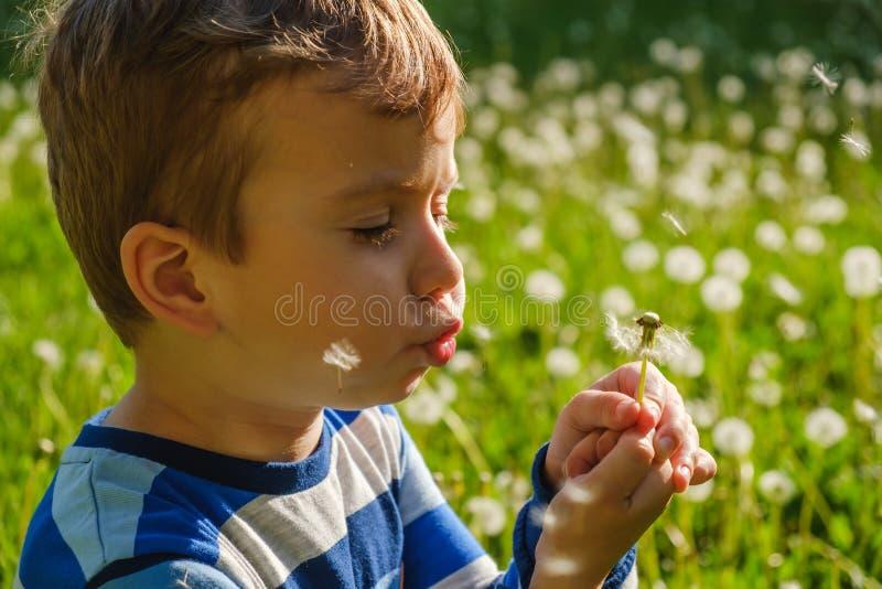 Ребенок природы одуванчика немного милый день потехи стоковое изображение