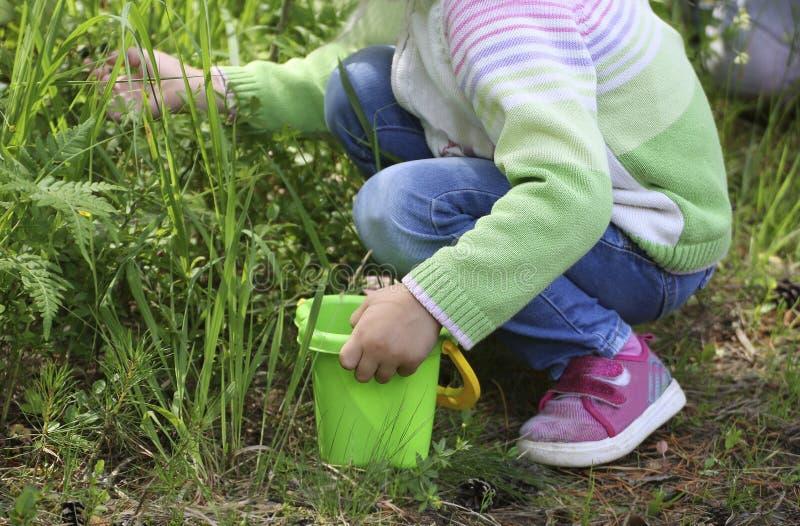 Ребенок собирает ягоды в лесе стоковые изображения