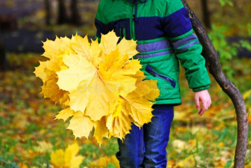 Ребенок с букетом листьев стоковая фотография rf