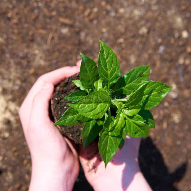 Ребенок с небольшим зеленым растением стоковые фотографии rf