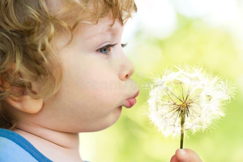 Ребенок с одуванчиком стоковая фотография