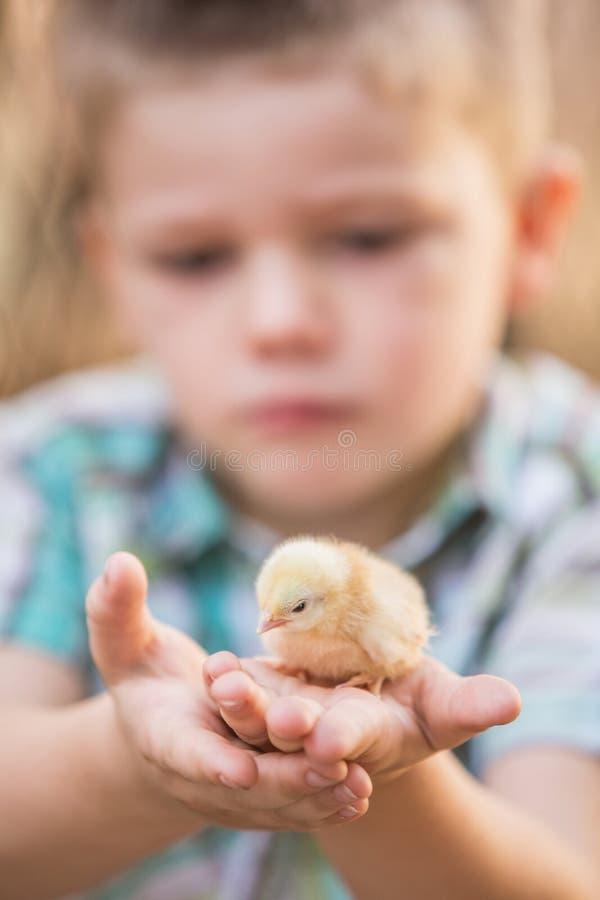 Ребенок с птицей младенца в ладони стоковое фото rf