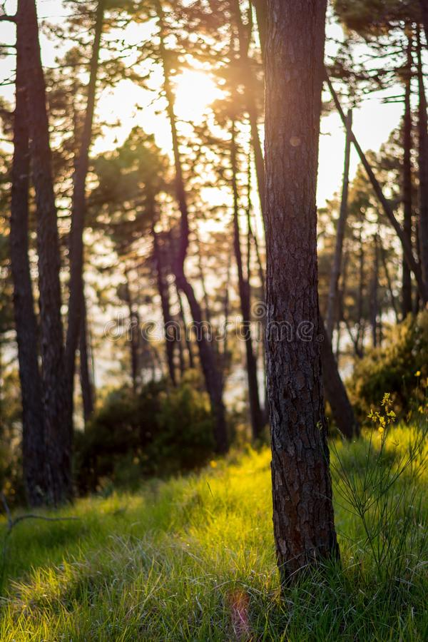 древесина лета стоковые фото