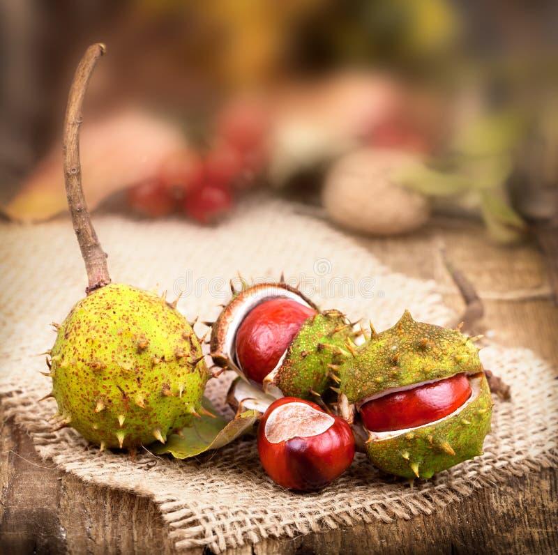 древесина pomegranate в октябре виноградин украшения каштана осени стоковое фото