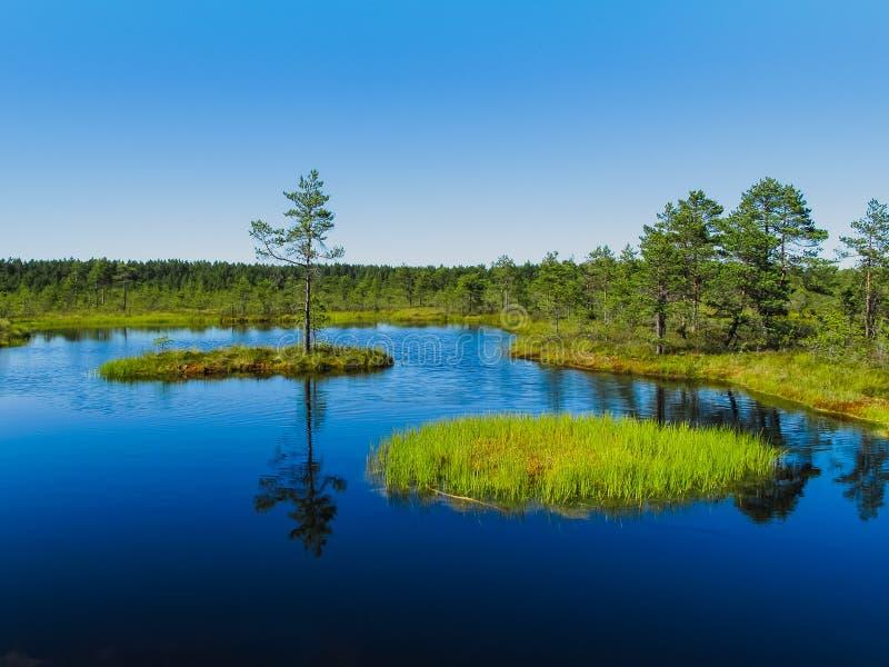 древесина viru топи raba природы озера эстонии стоковая фотография rf
