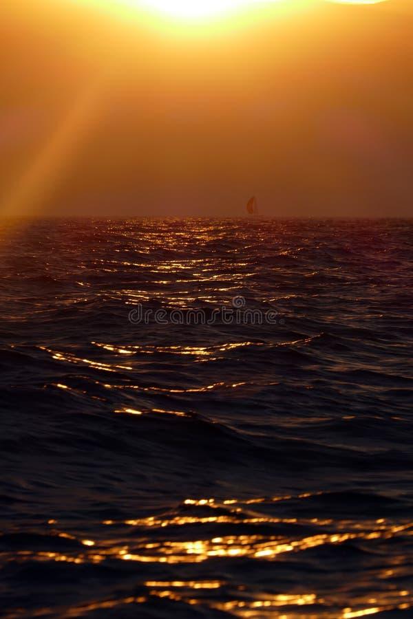 Регата плавания на заходе солнца стоковое фото rf
