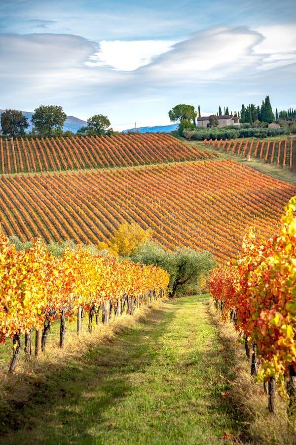 Регион Montefalco, Умбрия, Италия Виноградники в осени стоковые фото
