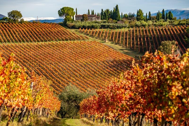 Регион Montefalco, Умбрия, Италия Виноградники в осени стоковое фото rf