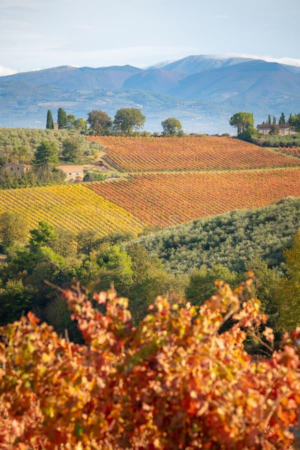 Регион Montefalco, Умбрия, Италия Виноградники в осени стоковые фотографии rf