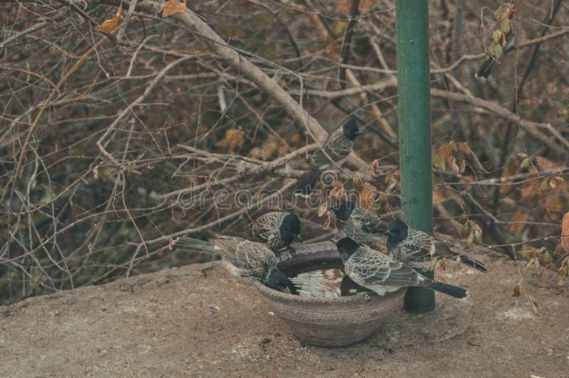 Регулярные птицы стоковая фотография