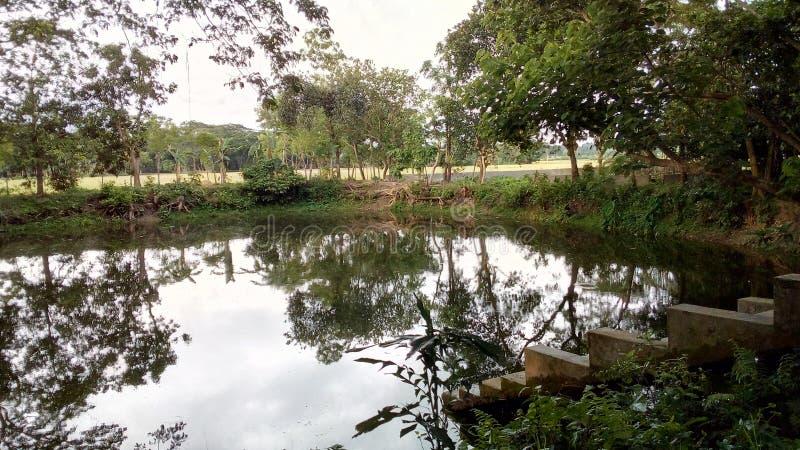 Регулярн вид на озеро стоковые изображения rf