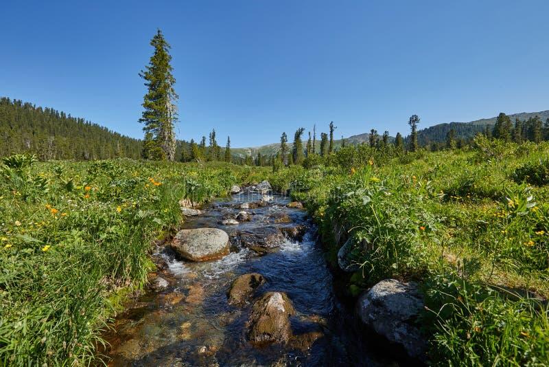 Редкие заводы и цветки горы растут около потока o горы стоковые изображения rf