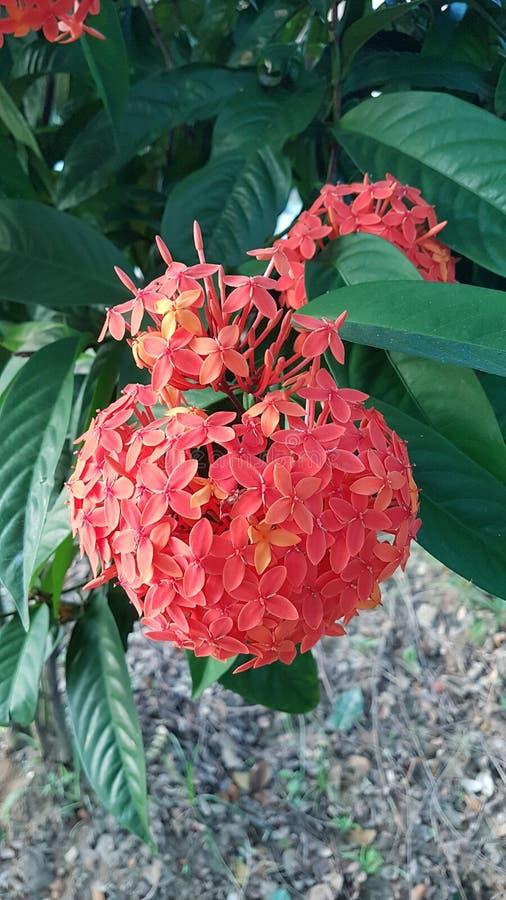 Редкий красный цветок стоковое фото rf