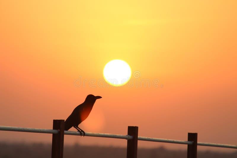 Режим potrait захода солнца стоковые фото