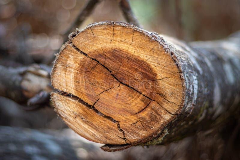 Резать деревянную картину цвета стоковое изображение rf