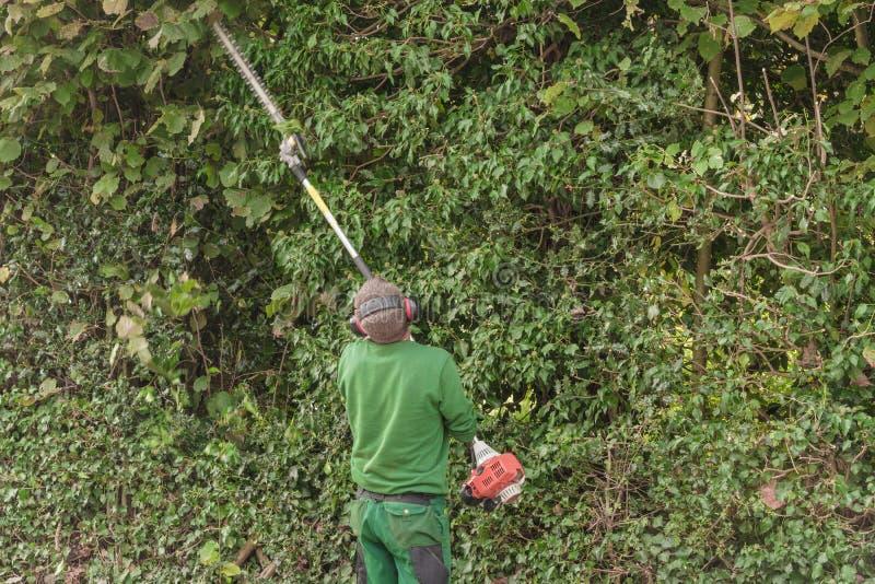 Резать изгородь с триммером изгороди двигателя стоковые фото