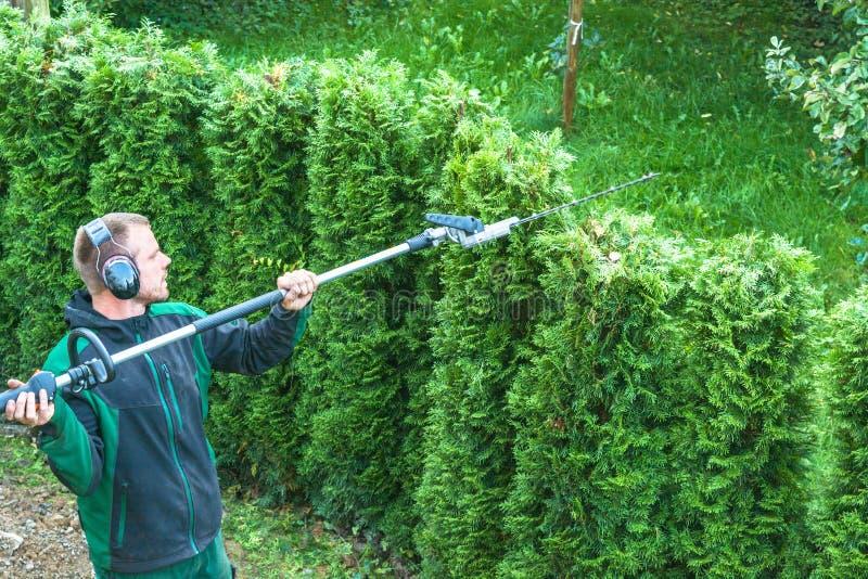Резать изгородь стоковая фотография rf