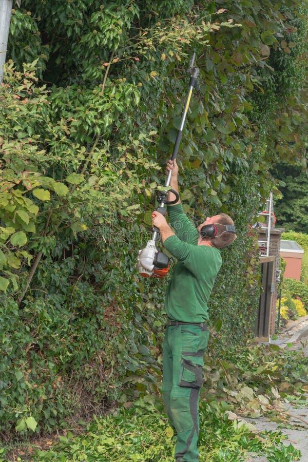 Резать изгородь стоковая фотография