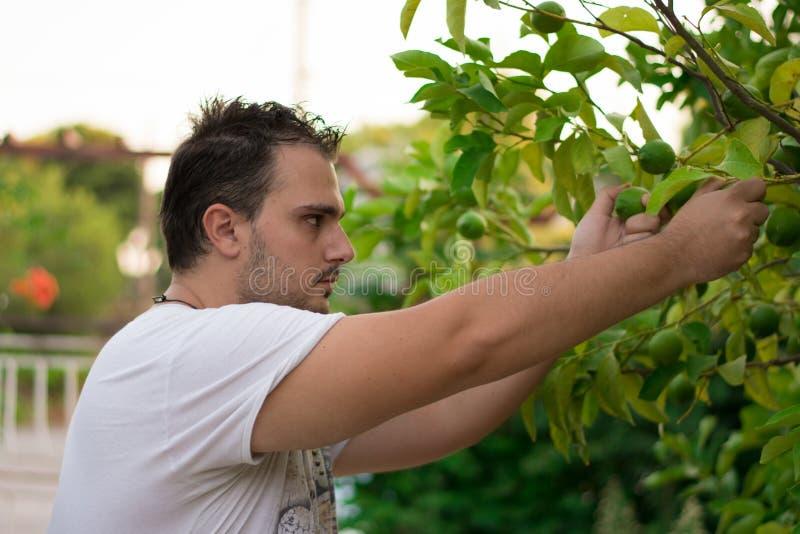 Резать лимоны стоковое изображение rf