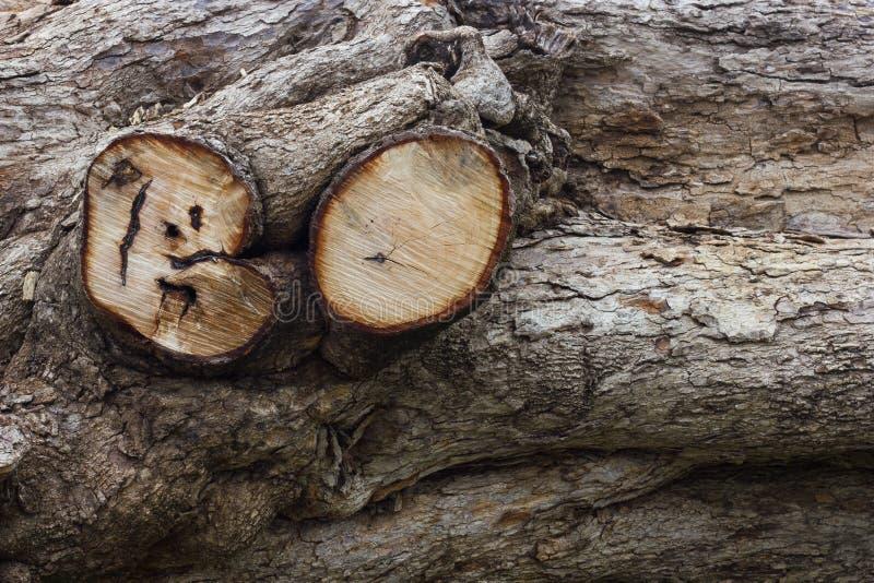 Резать обезлесение пней стоковое фото rf