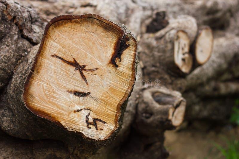 Резать обезлесение пней стоковые фотографии rf