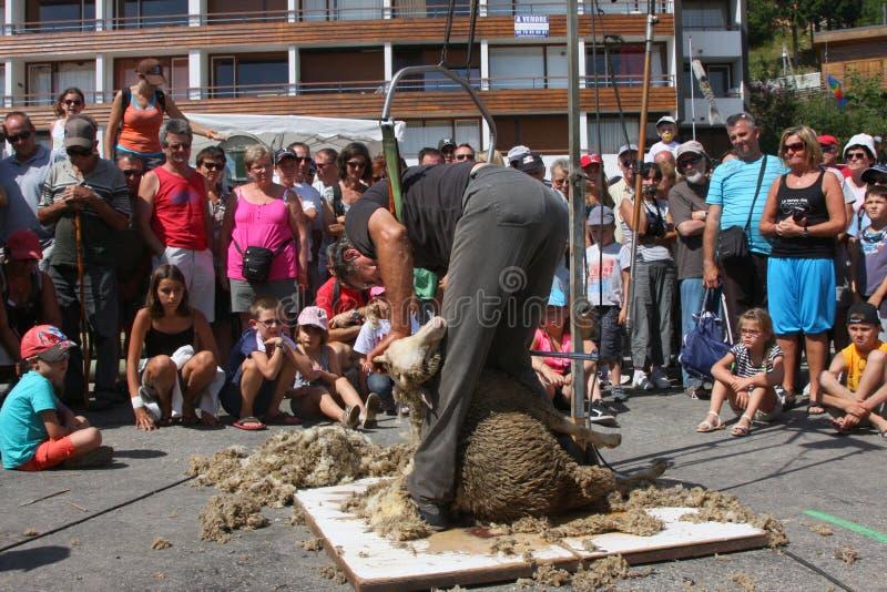 Резать овец стоковое фото