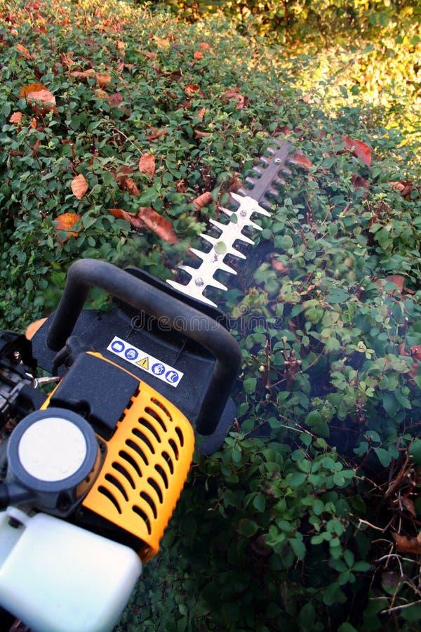 резать садовничая изгородь стоковые фото