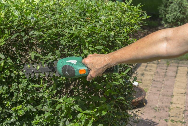 резать садовничая изгородь стоковое фото