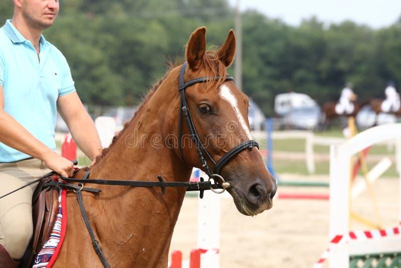 Резвитесь лошадь стоя во время конкуренции под седловиной outdoors стоковое изображение rf