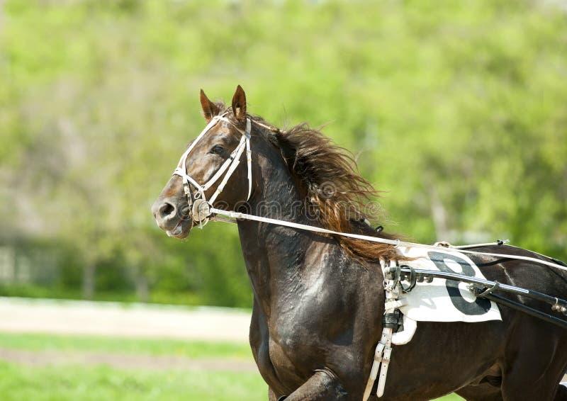 Резвитесь портрет лошади moving на солнечный день стоковые фото