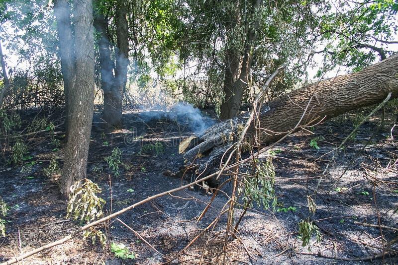 Резервуары и shelterbelts поля стоковые изображения