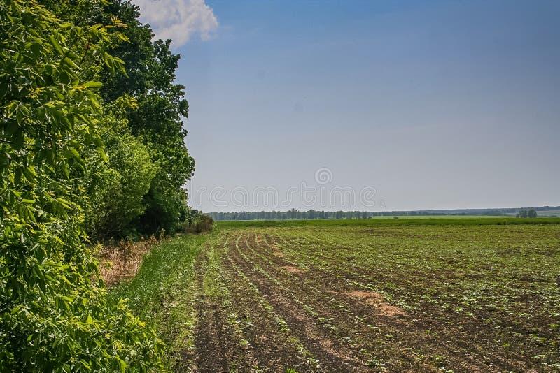 Резервуары и shelterbelts поля стоковая фотография