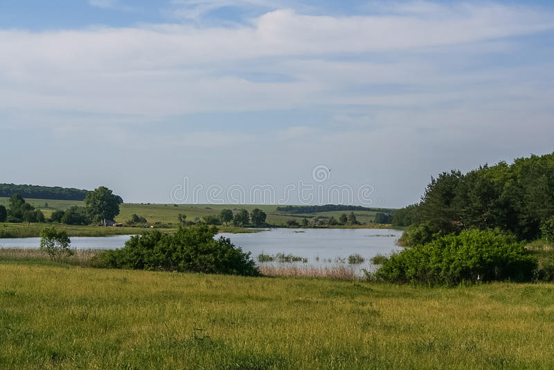 Резервуары и shelterbelts поля стоковые фото
