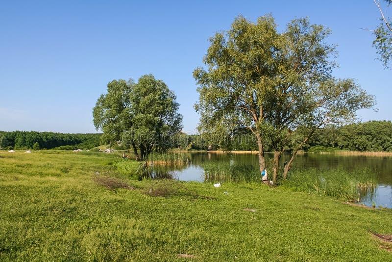 Резервуары и shelterbelts поля стоковое изображение