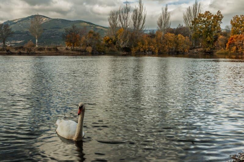 Резервуары, отражения воды и красивые небеса стоковое фото