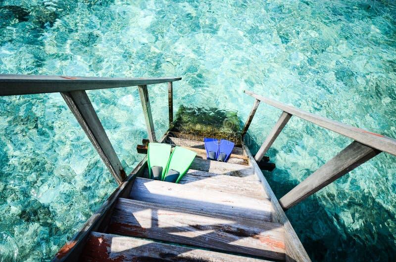 Резиновые флипперы на море стоковые фото