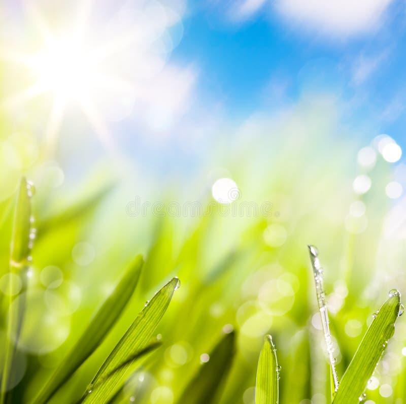 резюмирует весну предпосылки зеленую естественную стоковая фотография rf
