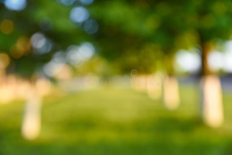 Резюмируйте запачканную предпосылку, парк и красивый солнечный свет стоковые фото