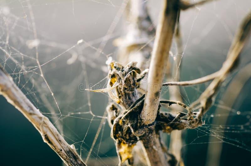 Резюмируйте запачканную предпосылку, хаос сети паука на мертвом дереве стоковая фотография